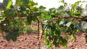 Колышки и опоры для растений POLYARM